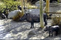 2006-Living-Desert-Zoo-Wart