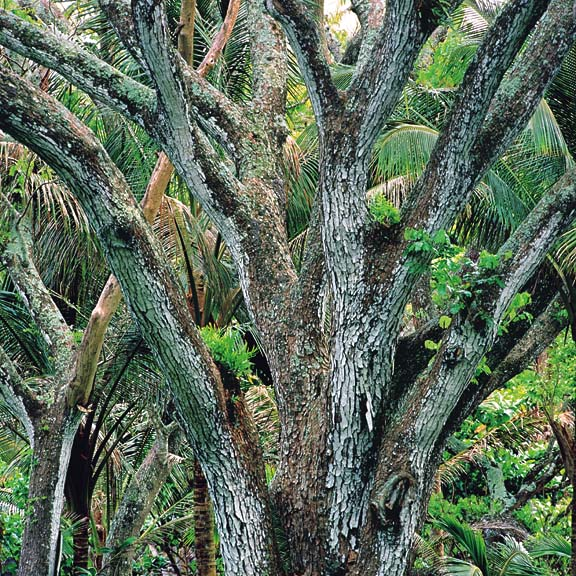 """Kalopa Forest, Hawaii"", 1996, © Christopher Burkett"