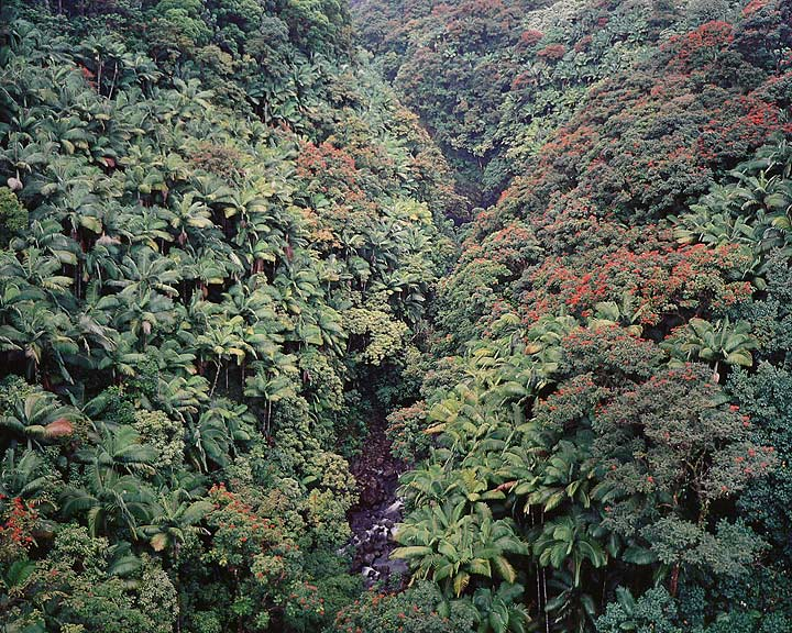 """Tropical Forest Valley, Hawaii"", 1996, © Christopher Burkett"
