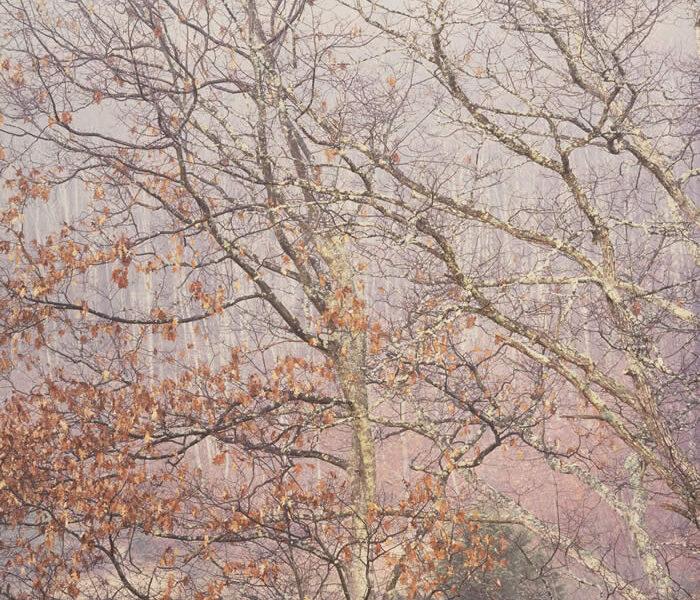 Appalachian Mist